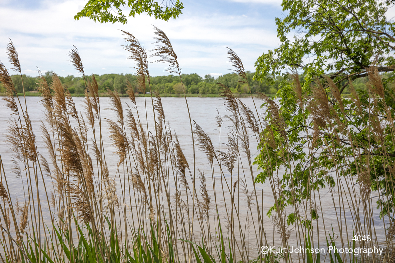 tall brown green grass grasses waterscape midwest water