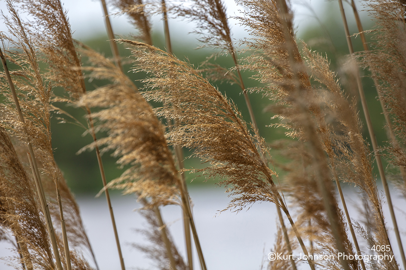 brown wheat field grass grasses close up macro detail midwest