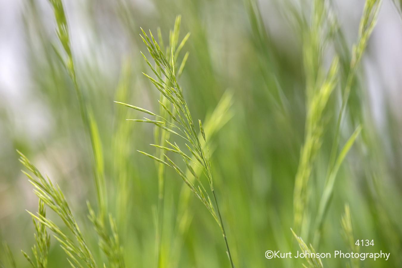 green grass grasses field close up detail