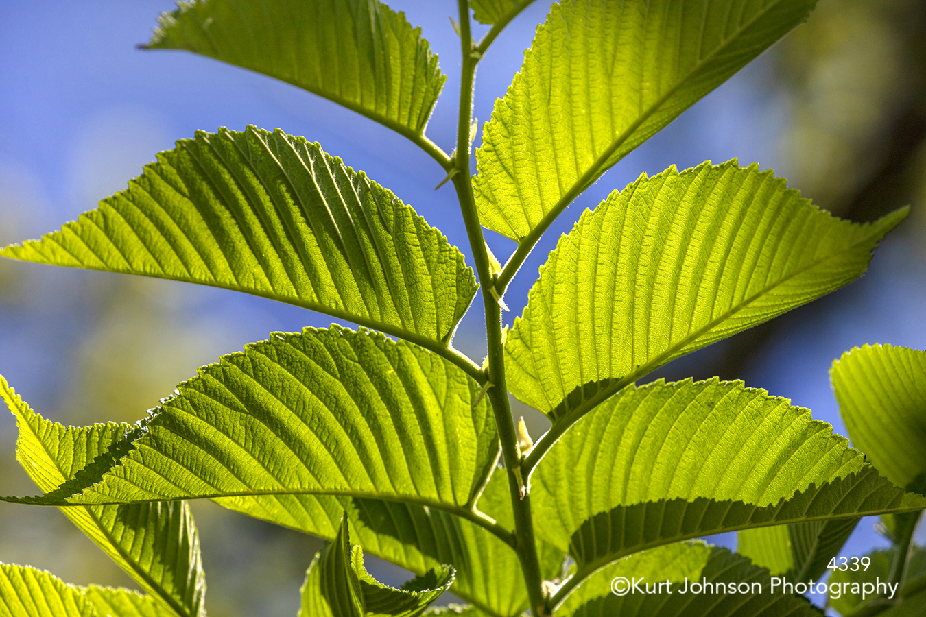 green leaves sunlight lines details close up macro plant tree branch