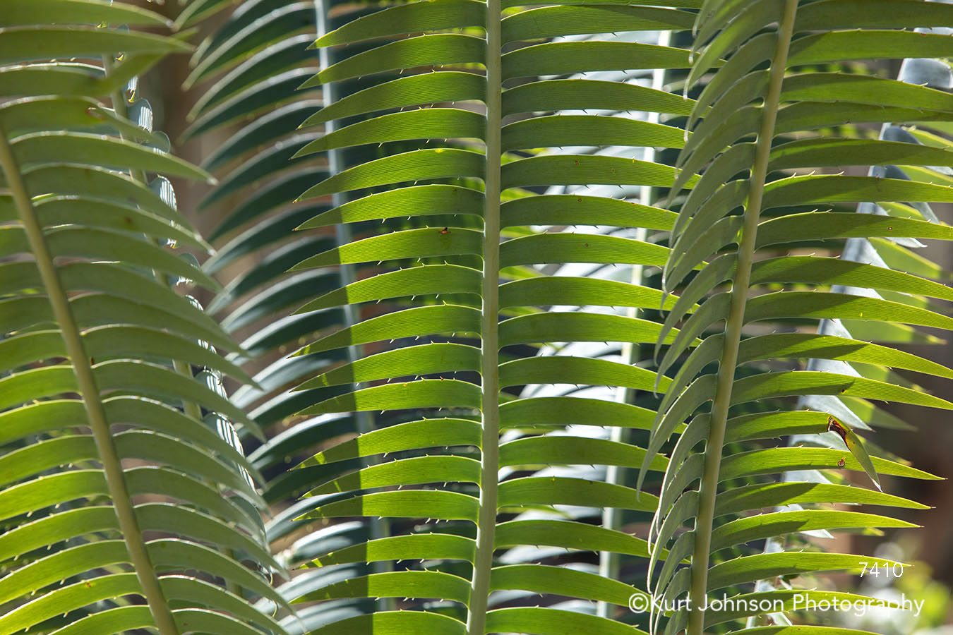 green fern leaves lines pattern texture close up detail