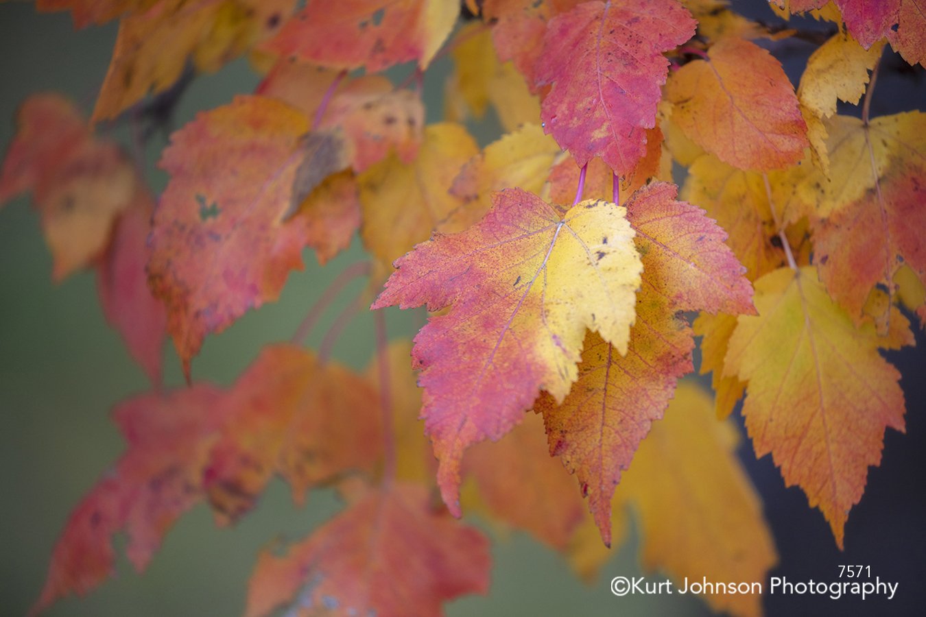 red yellow orange leaves tree branches trees close up details macro
