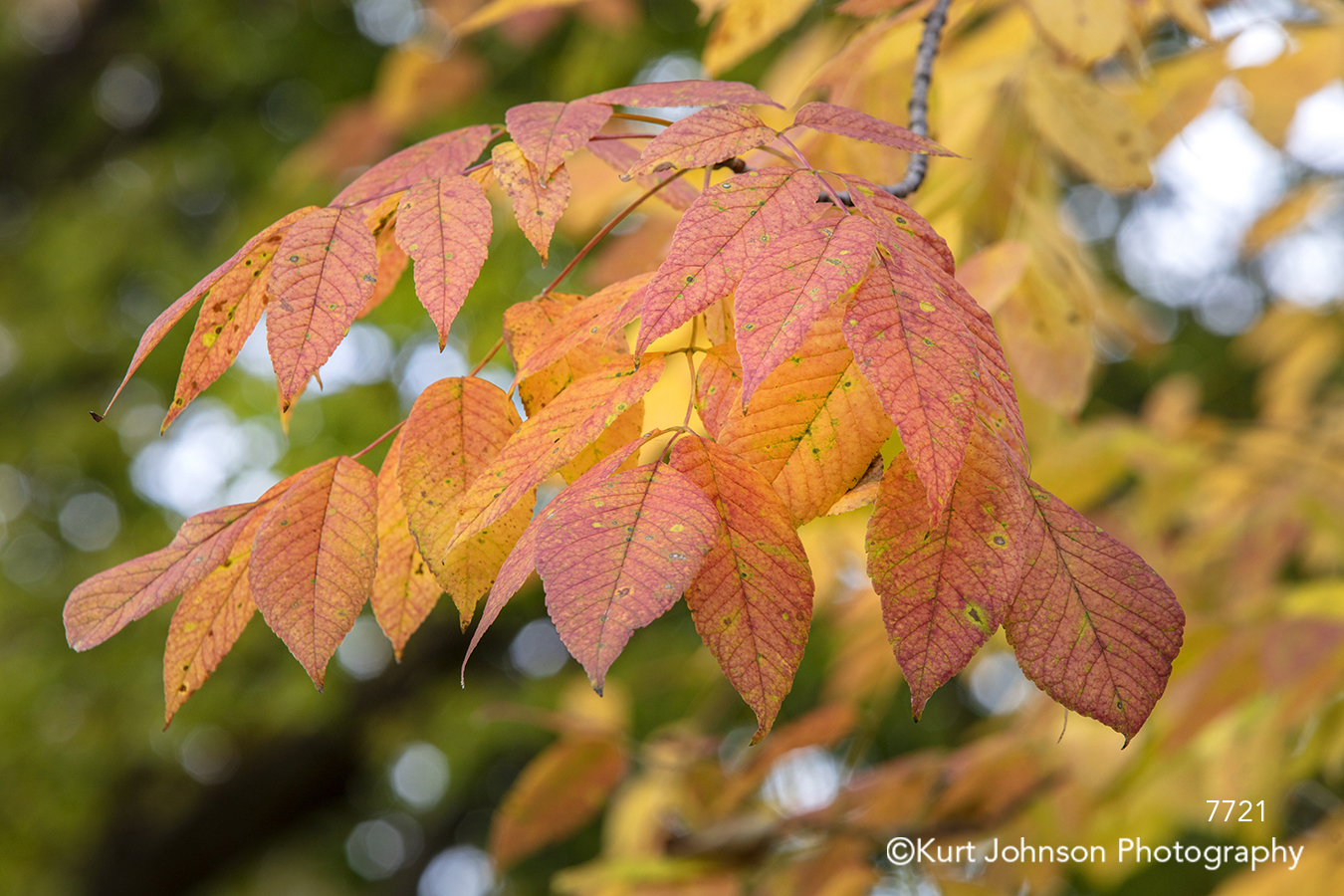 orange yellow leaves tree trees autumn fall branches