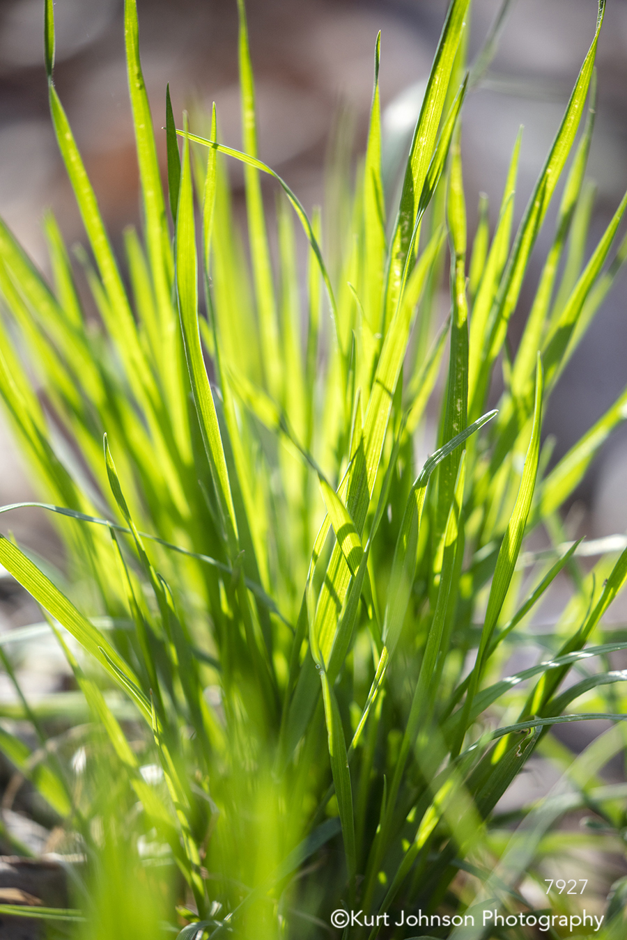 green grass grasses field spring close up detail macro