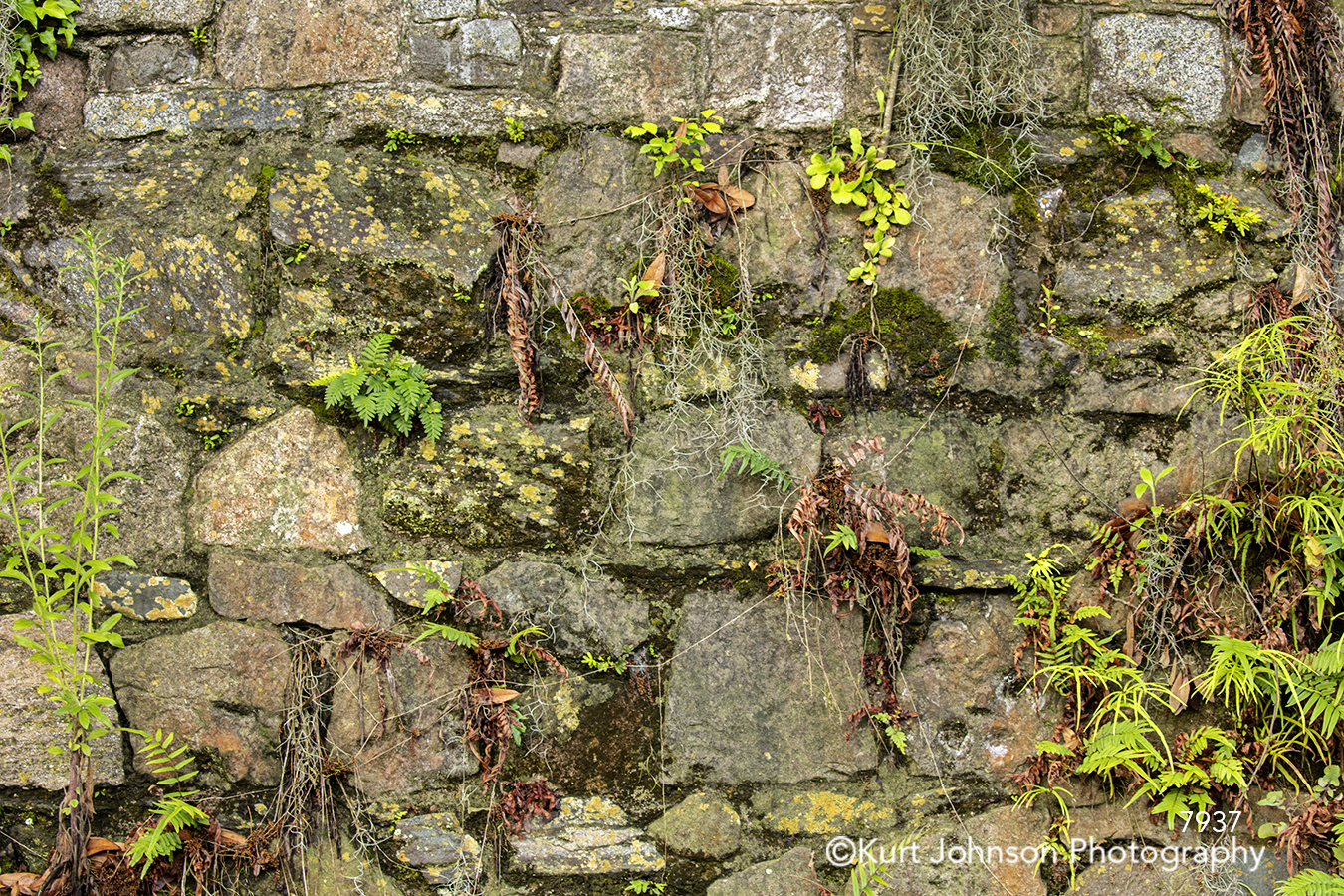 green moss rock ivy climbing leaves vines stone texture textures stone wall pattern