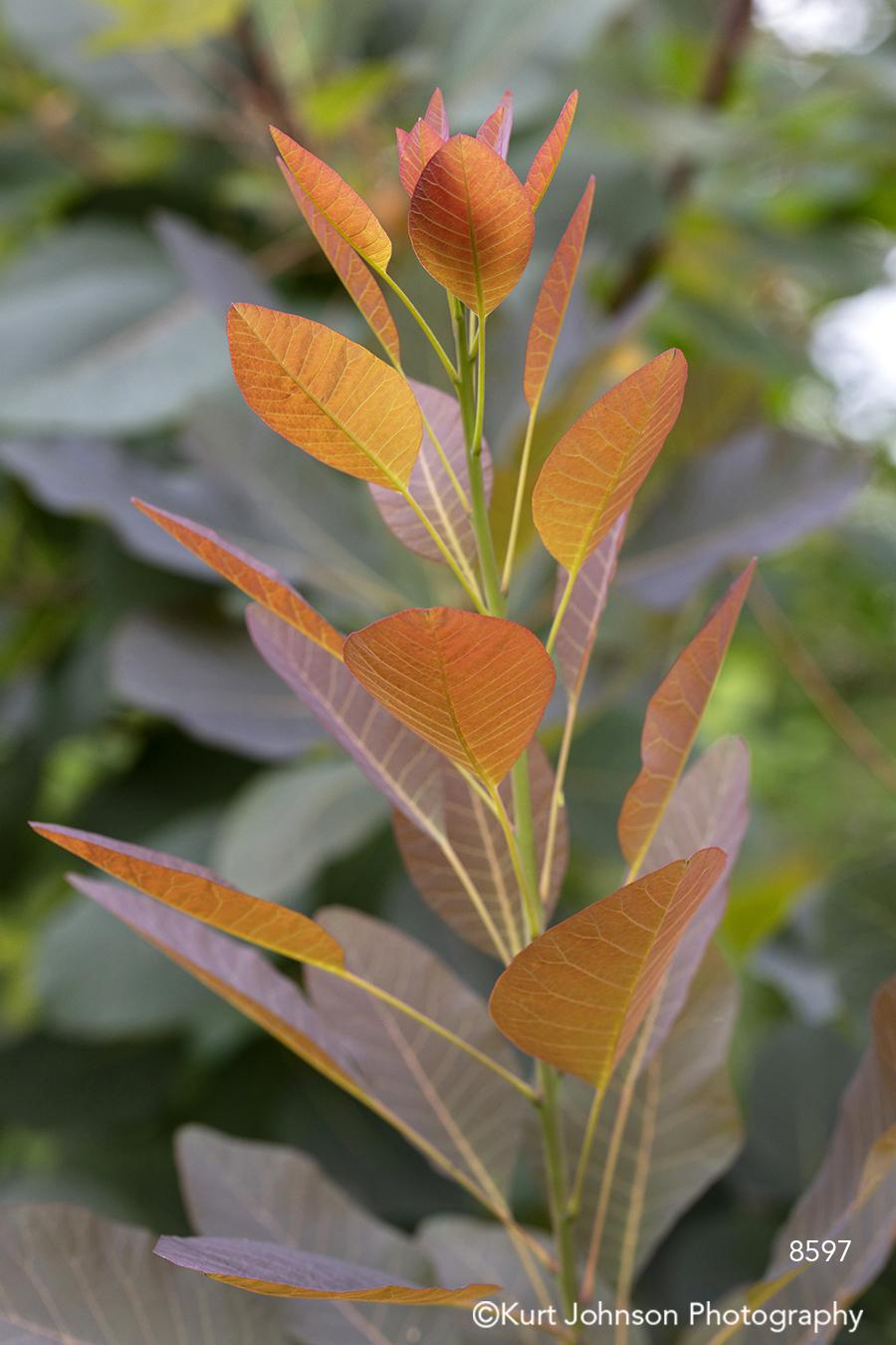 orange leaves plant close up details macro green