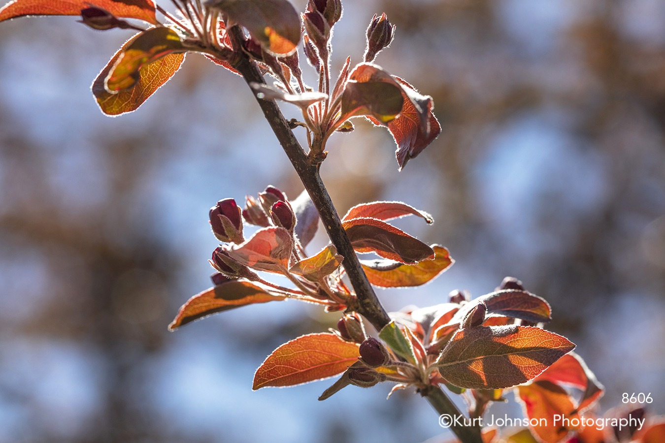 red brown spring tree leaves branch tree close up detail