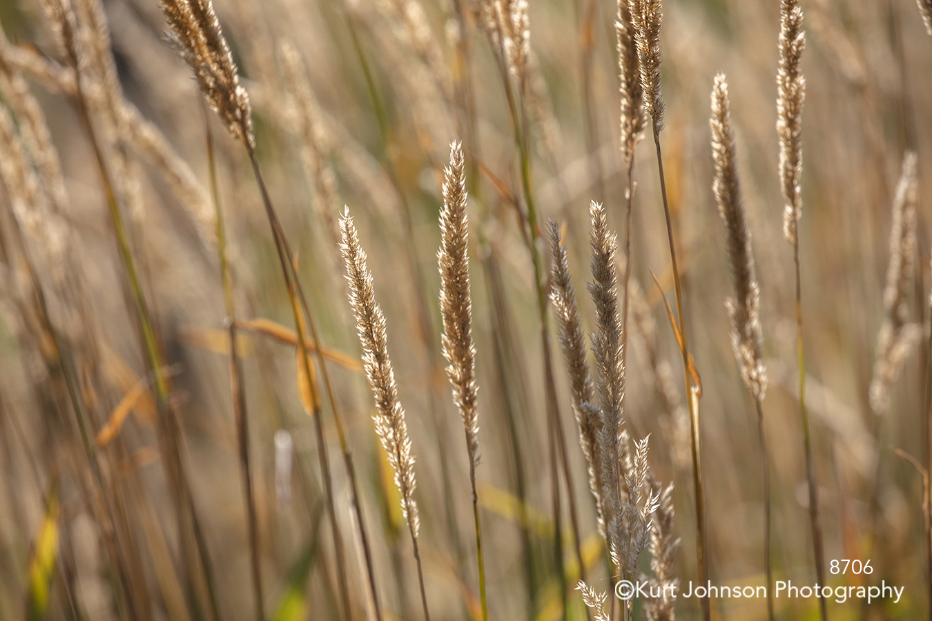 gold yellow grass wheat field lines pattern texture textures brown grasses