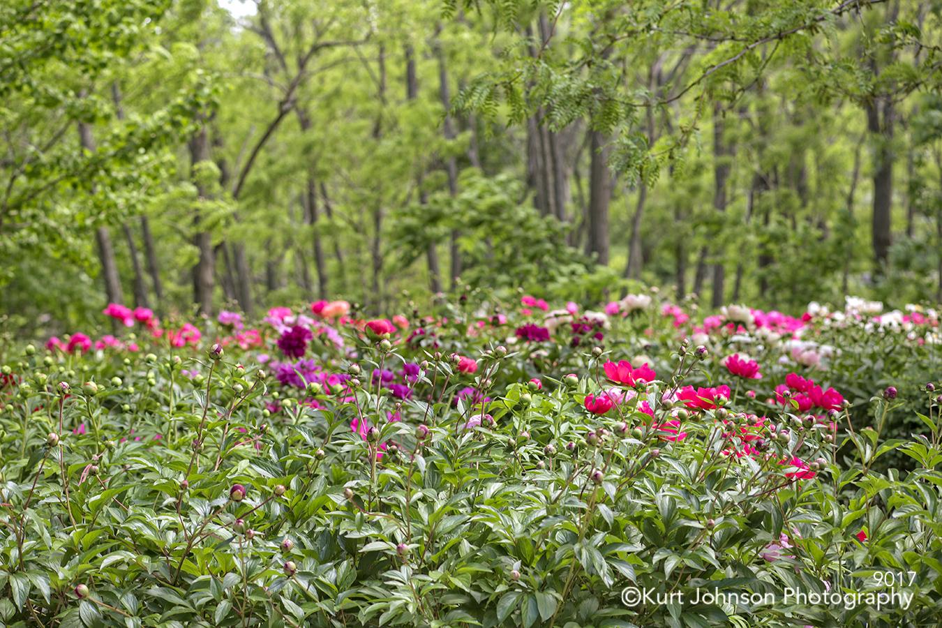 green grass grasses flower field trees wildflowers meadow pink flowers