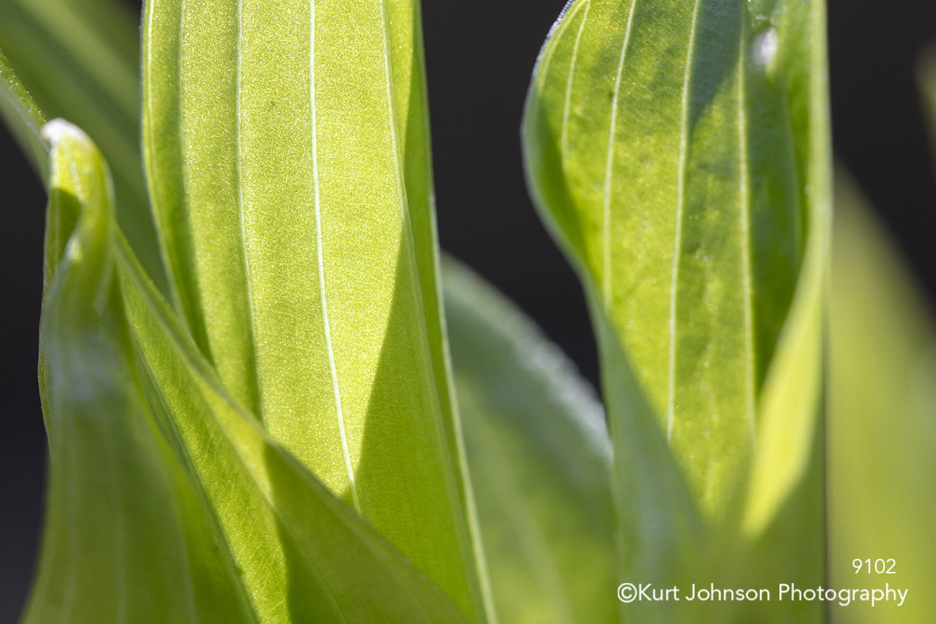green leaves shadows light lines pattern texture plant close up detail