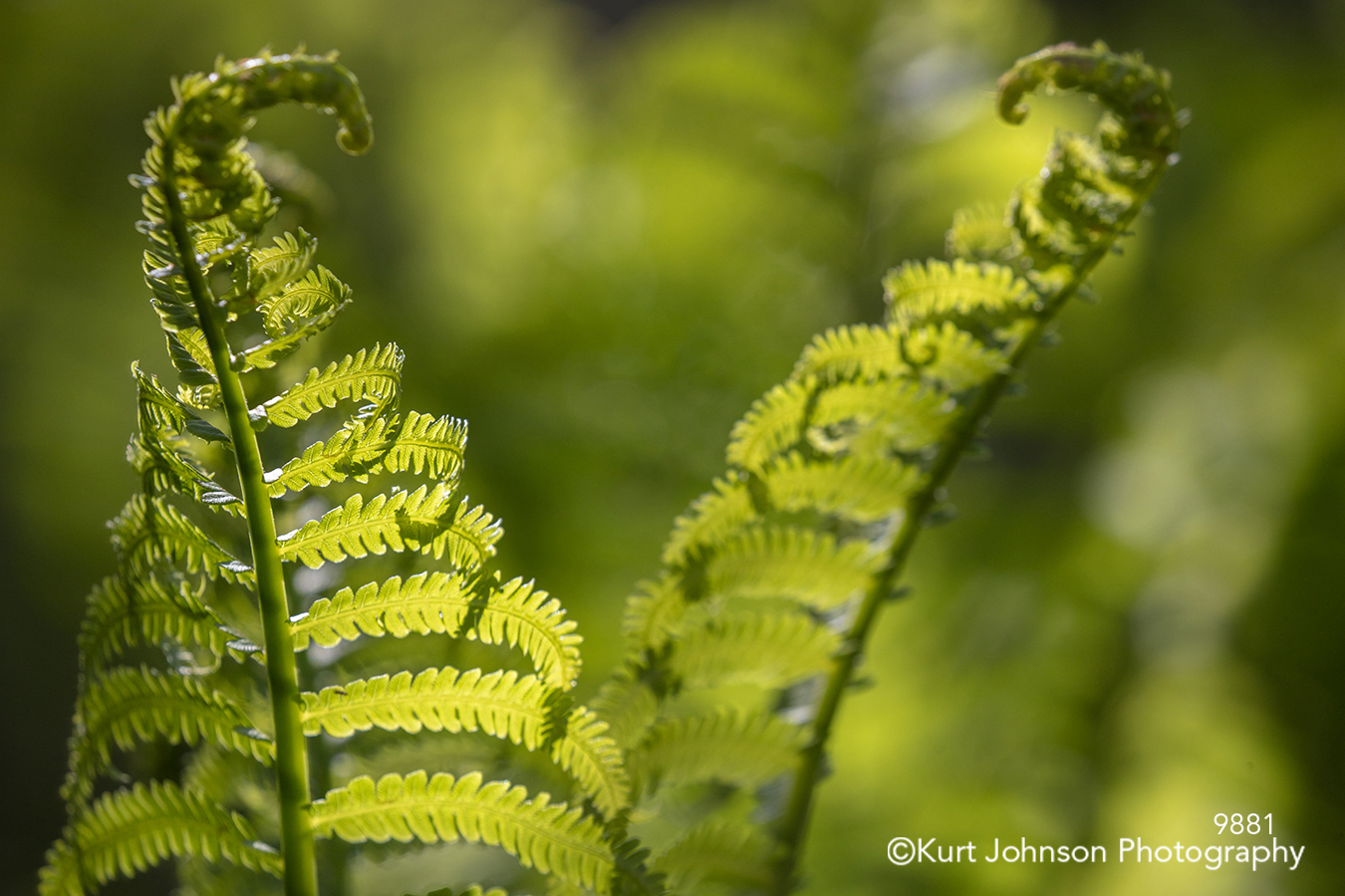 green fern leaves sunlight shadows lines pattern texture detail close up
