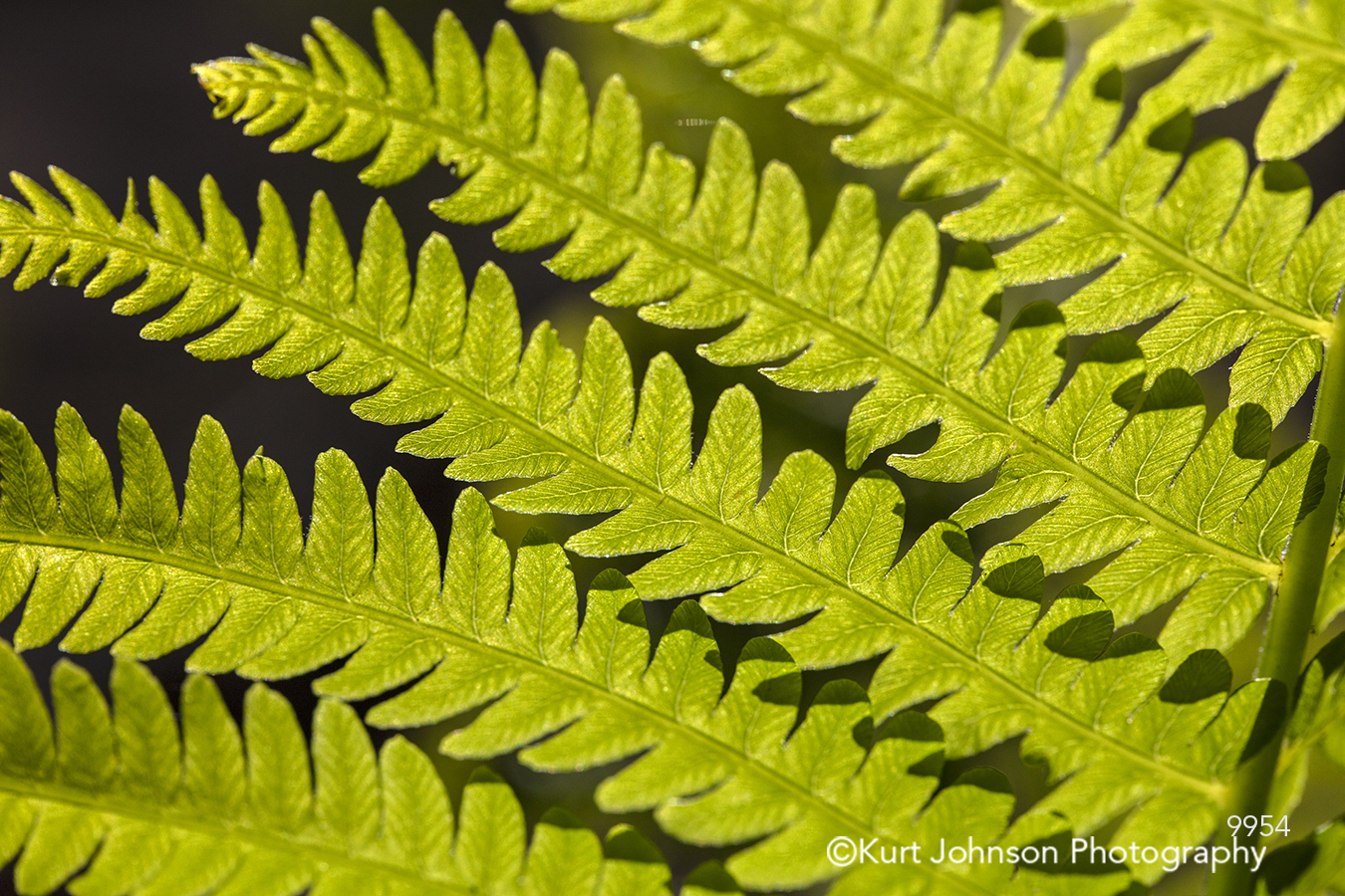 green leaves shadows light fern ferns plant close up detail