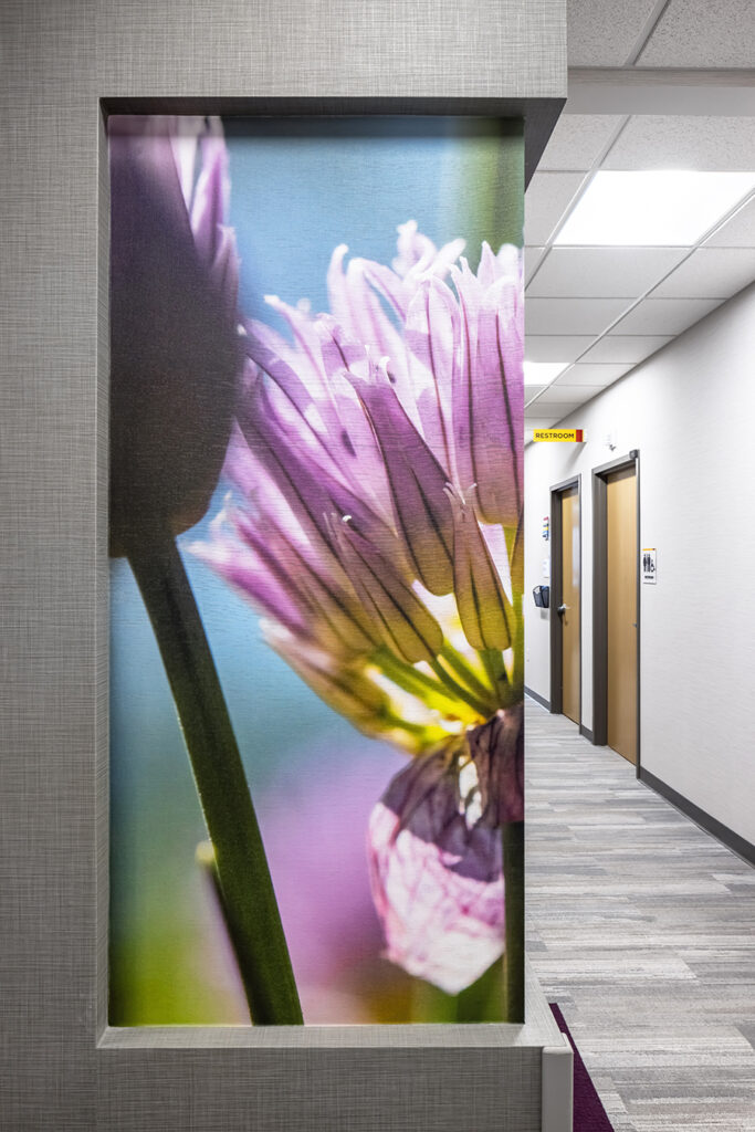 Fairview health services river falls WI Wisconsin BDH Koroseal large scale wallcovering graphic mural purple flower close up hall hallway corridor