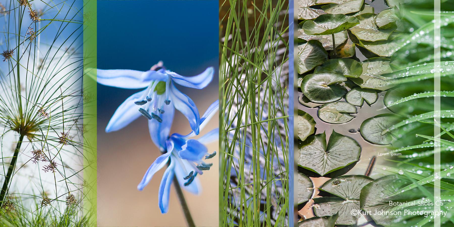 purple blue flower green grass grasses color slice botanical slices c5 lily pad